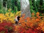 Autumn_at_Heather_Meadows_North_Cascades_Washington251504_9.jpg